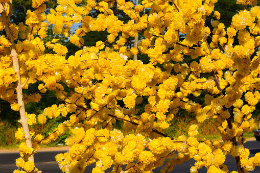 Artificial flowers made of yellow plastic bag and decorated by Christmas and New Year.
