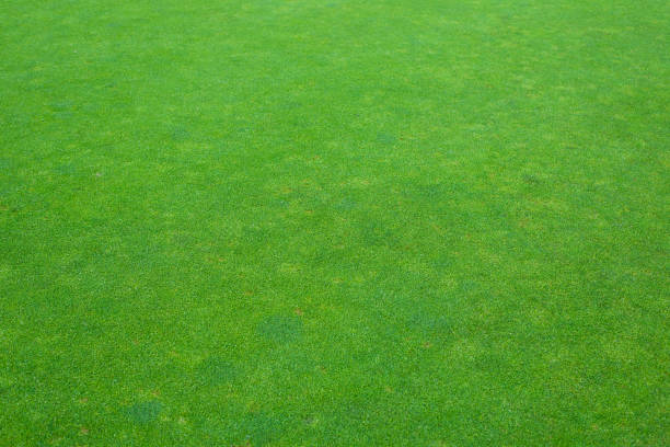 artificial green grass field in golf course stock photo