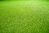 Asia, Grass, Lawn, Green Color, Environmental Conservation