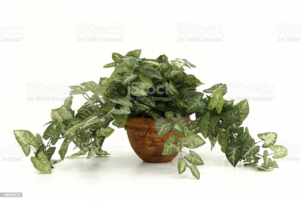 Artificial House Plant royalty-free stock photo