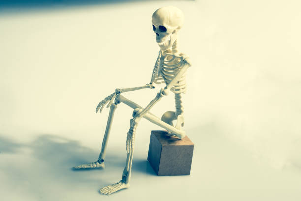 artificial human body skeleton on sitting posture stock photo