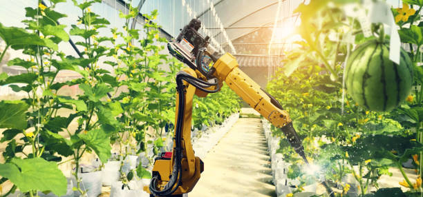 Artificial intelligence. Pollinate of fruits and vegetables with robot. Detection spray chemical. Leaf analysis and oliar fertilization. Agriculture farming technology concept. stock photo