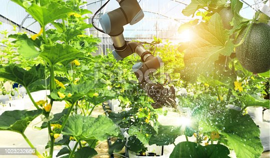 istock Artificial intelligence. Pollinate of fruits and vegetables with robot. Detection spray chemical. Leaf analysis and oliar fertilization. Agriculture farming technology concept. 1023232686