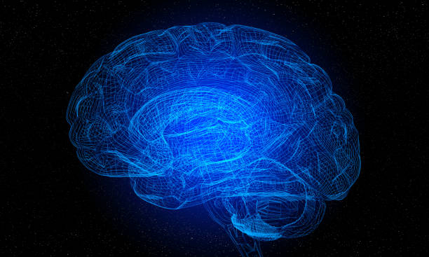 Artificial Intelligence With 3d Futuristic Wireframe Human Brain Artificial Intelligence 3d Futuristic Wireframe Human Brain Model on black background. ( 3d render ) biomedical illustration stock pictures, royalty-free photos & images