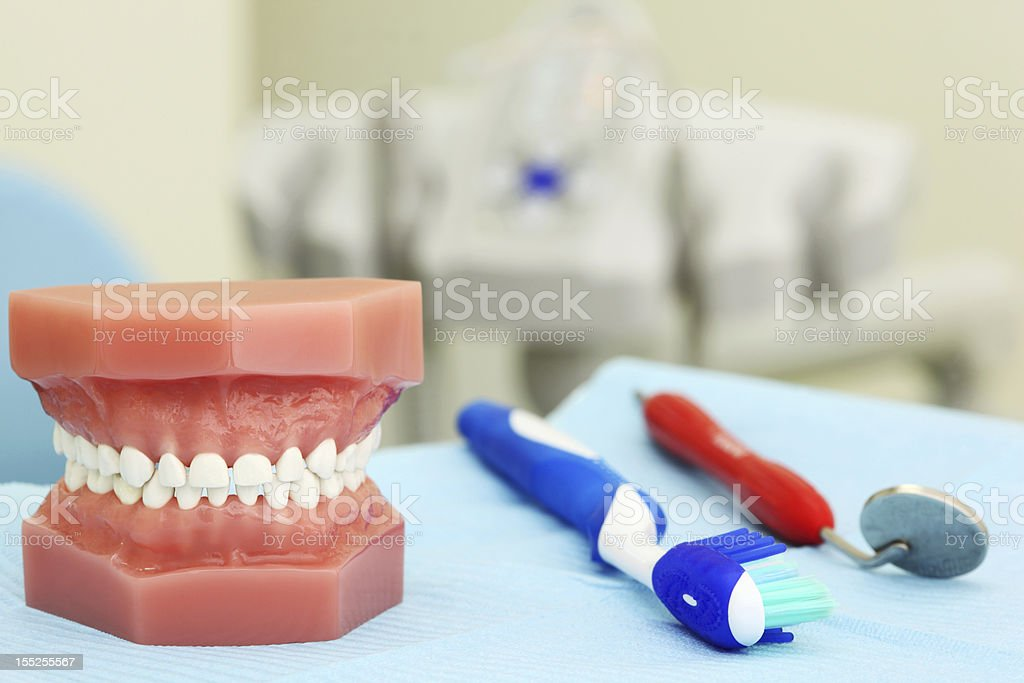 Artificial jaw, tooth brush and dental tool are on table royalty-free stock photo
