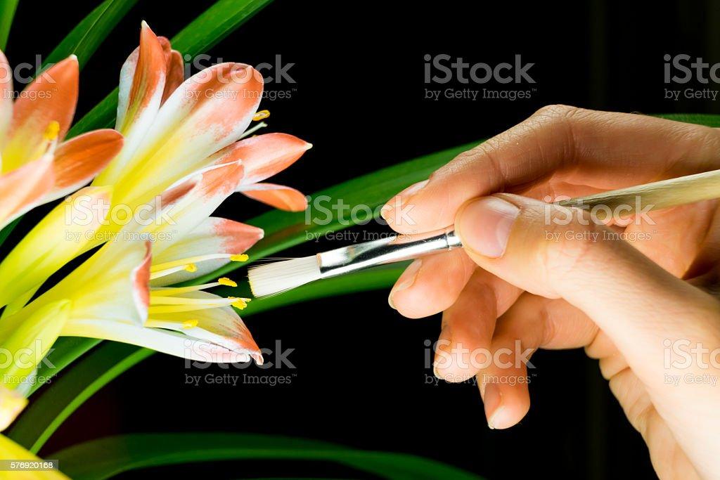 Artificial pollination stock photo