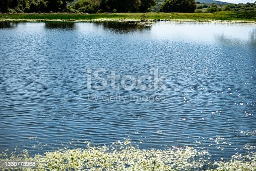 istock artificial pond made for animals to drink water in a small town 1330773968