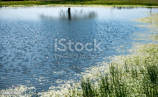 istock artificial pond made for animals to drink water in a small town 1330774022