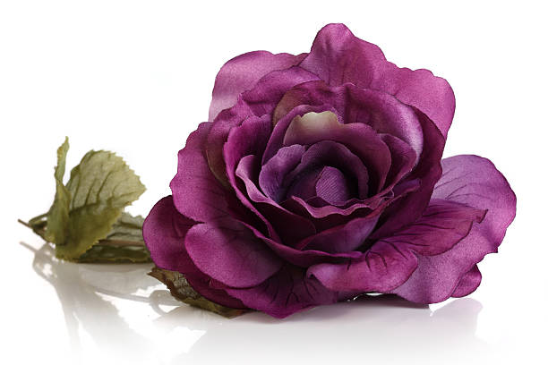Artificial Purple Rose Isolated On White Background Stock Photo