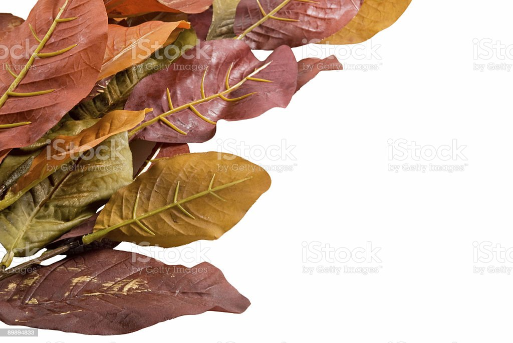 artificial silk autumn leaves on an isolated white background royalty-free stock photo