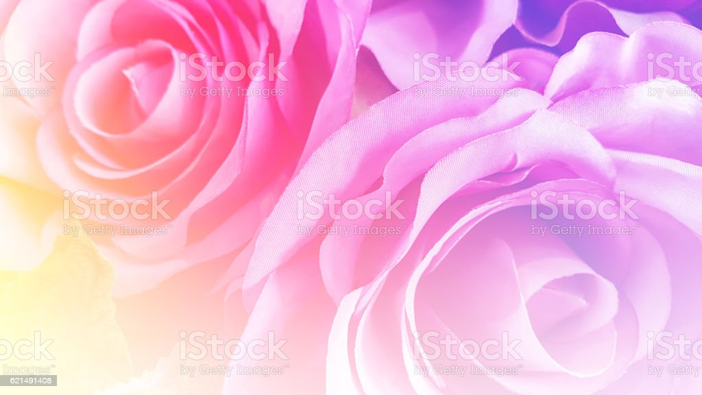 Artificial soft pink roses with blur color filter as background photo libre de droits