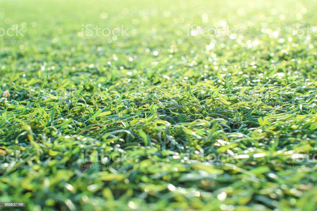 Artificial turf stock photo