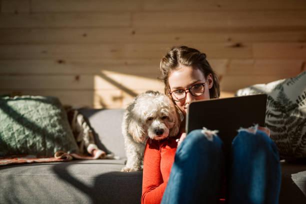 artista dibujo en casa en compañía de su perro caniche - mascota fotografías e imágenes de stock