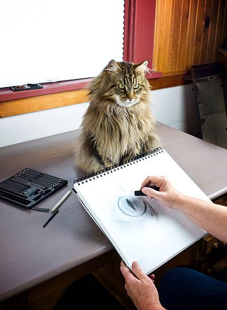 künstler zeichnen eine maine-coon-katze in dunkelgrau. - katze zeichnen stock-fotos und bilder