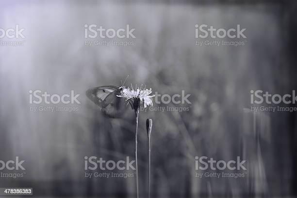 Artistic blur effect cabbage butterfly sitting on dandelion picture id478386383?b=1&k=6&m=478386383&s=612x612&h=cw1or8qo97kymdsyignahcyrwfb2erucjpiac2vz1mm=