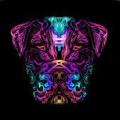 artistic bulldog on black background