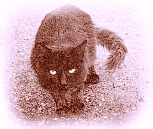 künstlerische cat - katze zeichnen stock-fotos und bilder