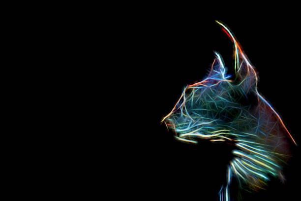 Artistic composition multicolored neon glow silhouette sphynx cat picture id814247384?b=1&k=6&m=814247384&s=612x612&w=0&h=dfkp2eifrafljjvgo zgpj6n0bqoayv7u6u0ywqcmau=