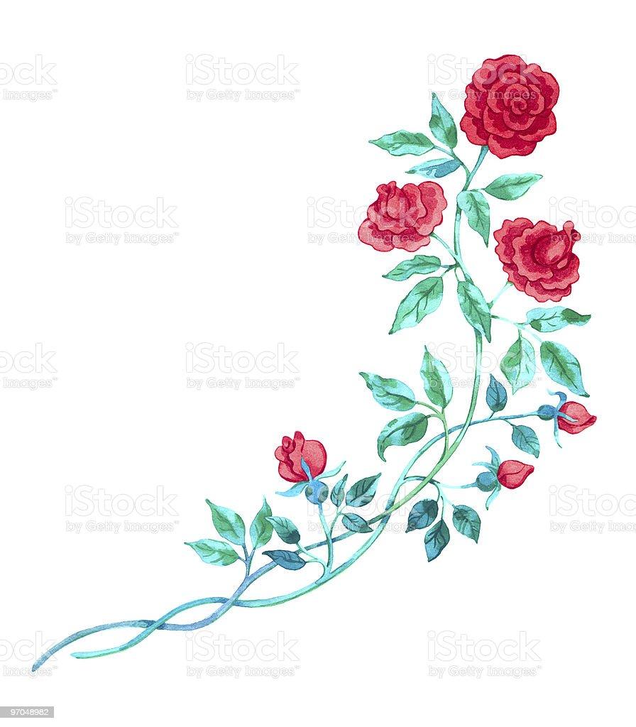 Artistique dessinrouge rose aquarelle isol sur blanc - Dessin de rose rouge ...