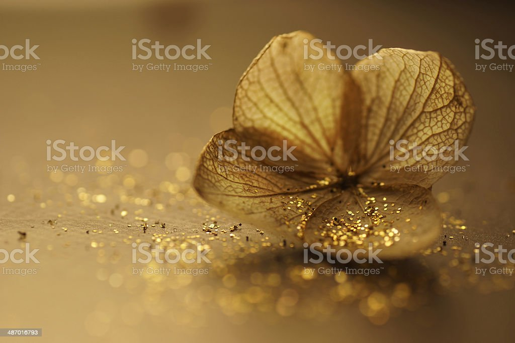 Artistic Dry Hydrangea paniculata (Panicle hydrangea) with sparkles, golden tone royalty-free stock photo