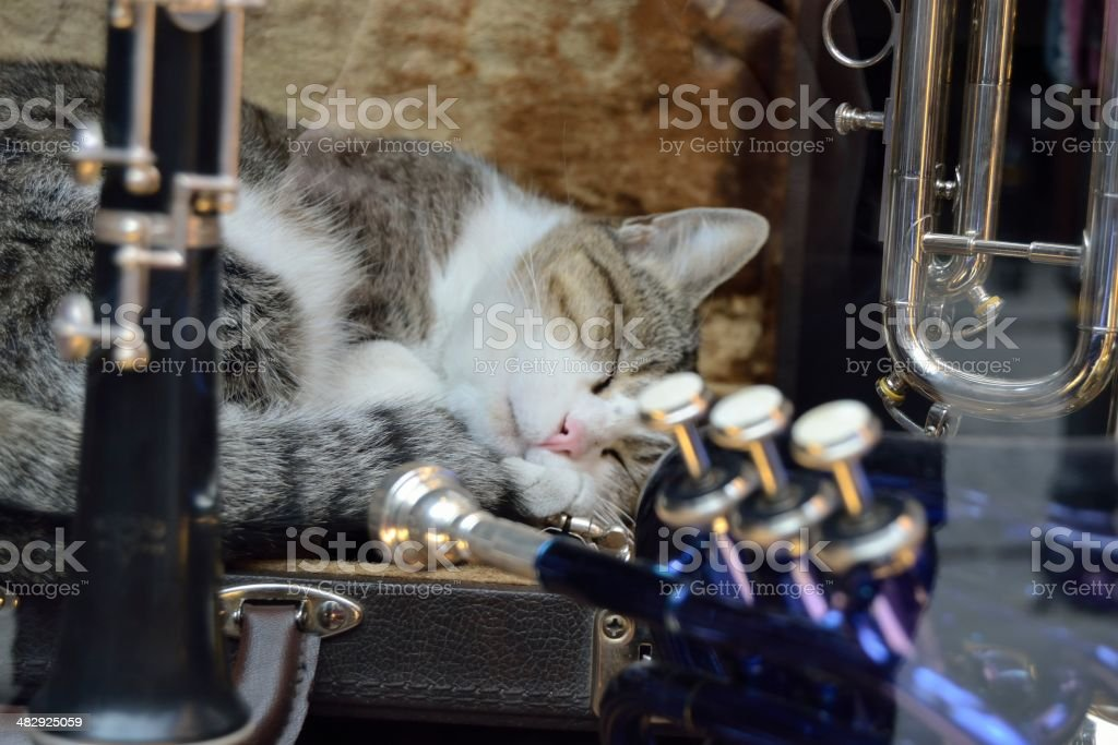 Artistic nap royalty-free stock photo