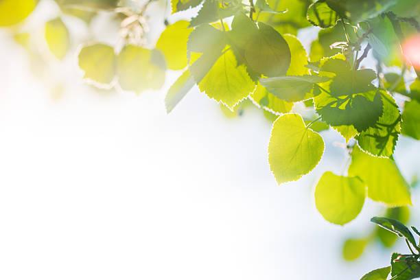 夏の bliss (ブリス) - 木漏れ日 ストックフォトと画像
