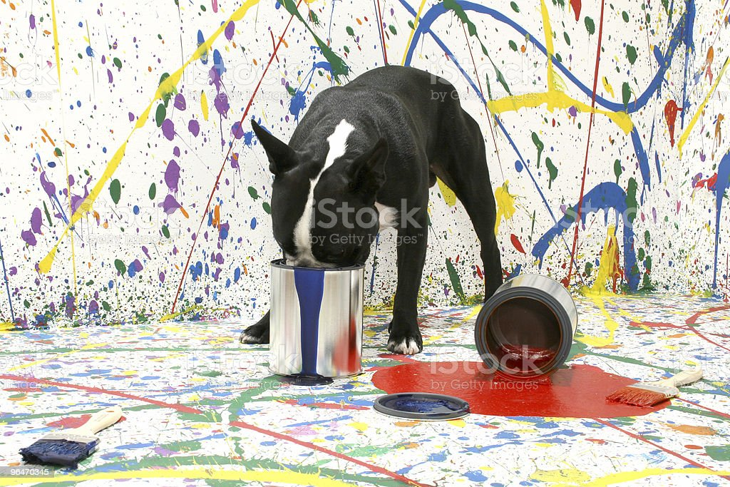 Artistic Pup royalty-free stock photo