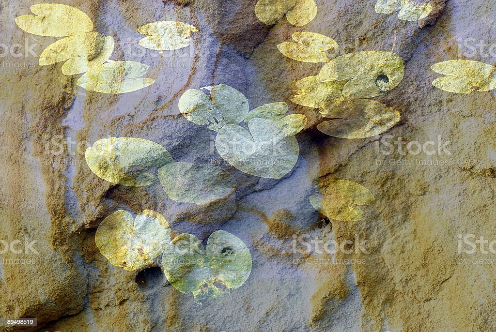 Artistic Sandy  Waterlily royalty-free stock photo