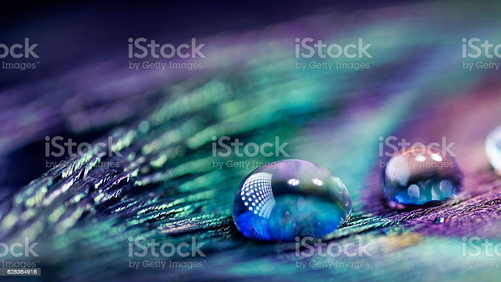 Artistic textured composition of Water drops on peacock feather stock photo