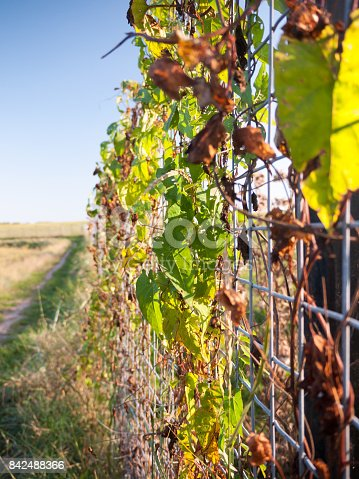istock artistic view of leafs on metal fencing on country walk way 842488366