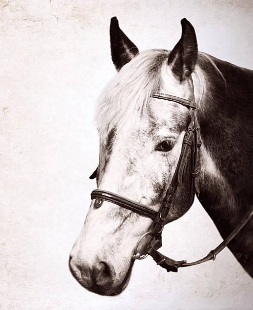 Artwork in retro style horse portrait picture id452553861?b=1&k=6&m=452553861&s=612x612&w=0&h=o3ehuu5di laug8ppukk2dafzdjm9xmg1pknzyaypqm=
