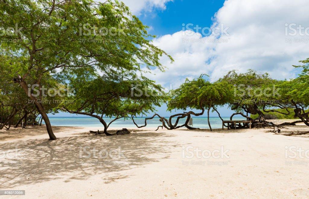 Aruba- Beach at Magel Halto stock photo