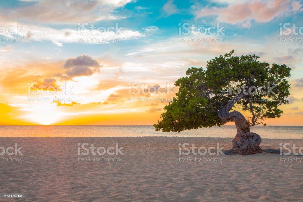 Aruba Beach Sunset Tree stock photo