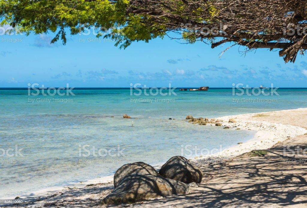 Aruba- Divi Divi Tree and Shipwreck stock photo