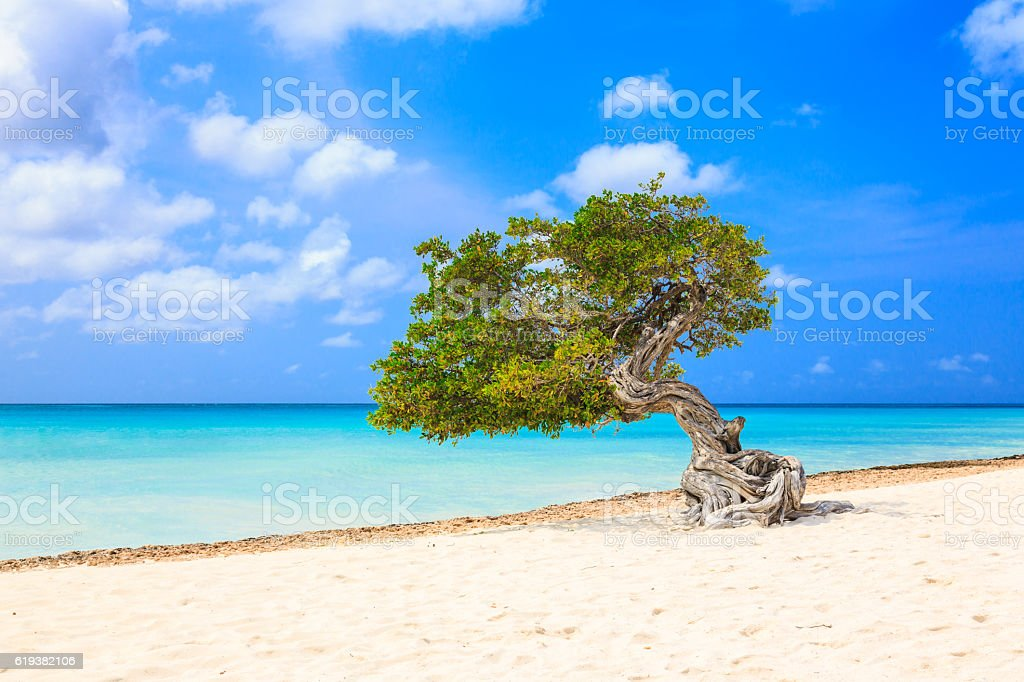 Aruba, Netherlands Antilles. stock photo