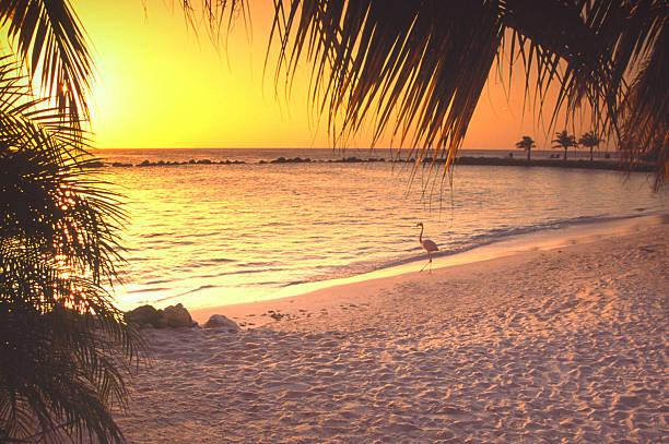 aruba - aruba stockfoto's en -beelden