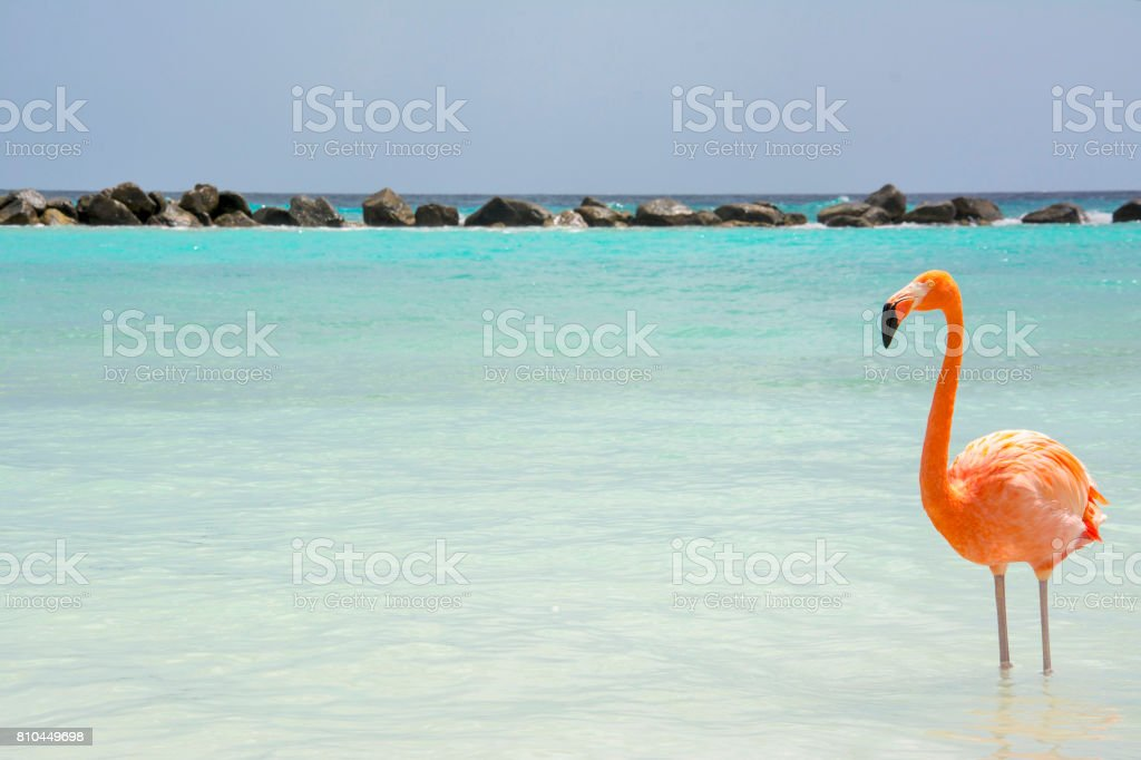 Aruba stock photo