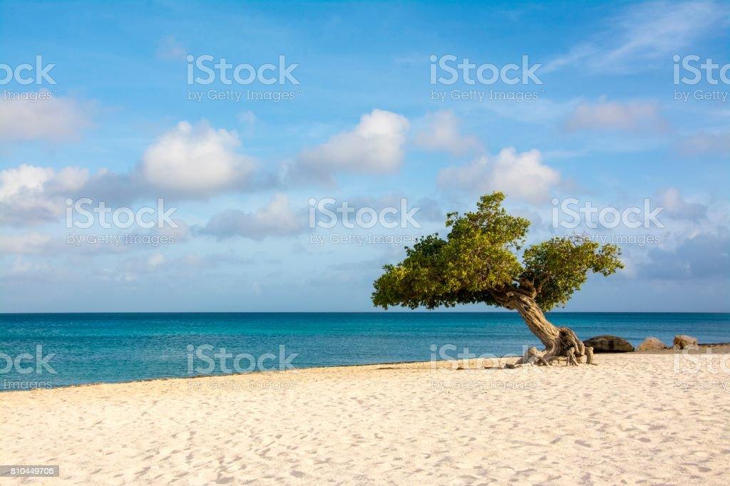 Aruba stock photo