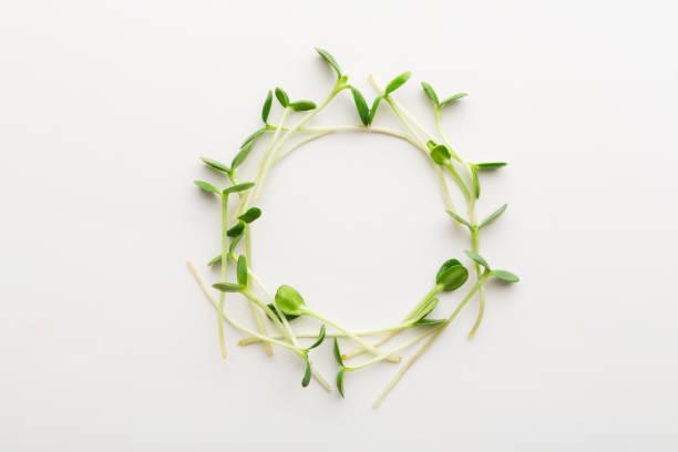 ruccola mikro greener isolerad på vit bakgrund - pea sprouts bildbanksfoton och bilder