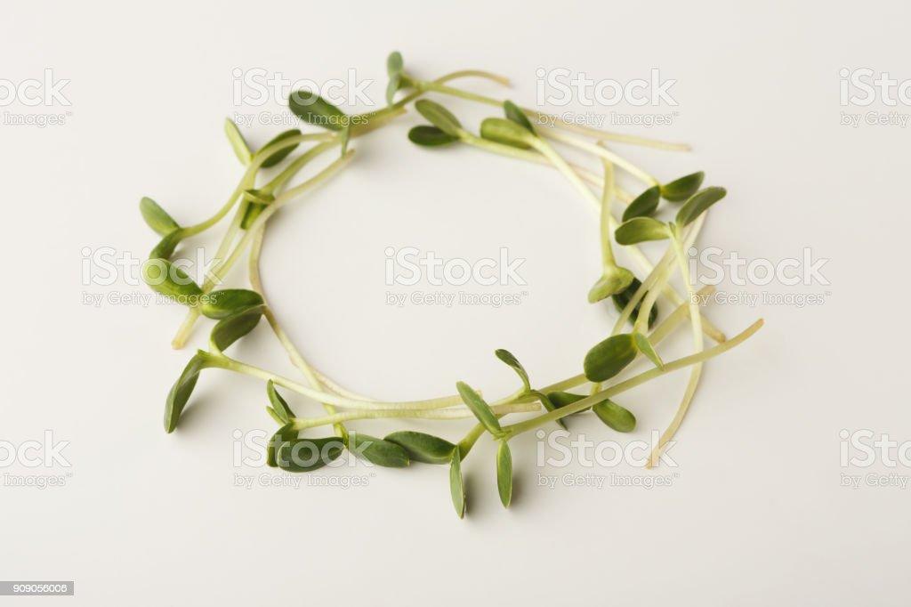 Arugula micro greens isolated at white background stock photo