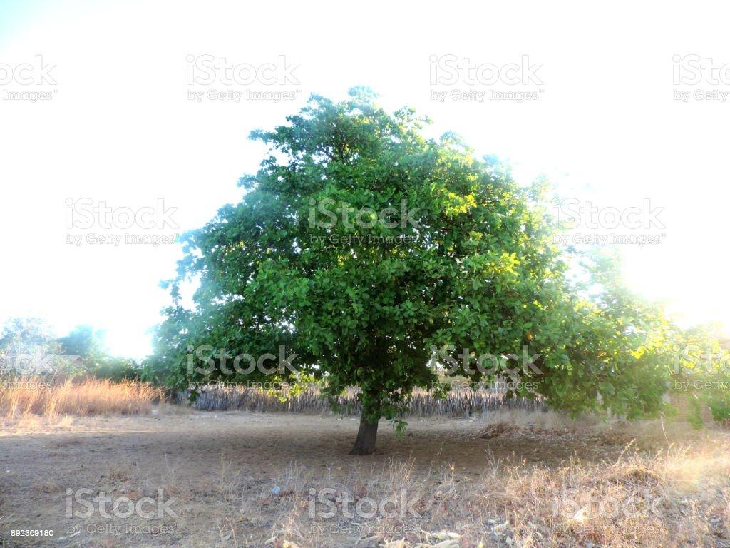 Arvore verde solitária stock photo