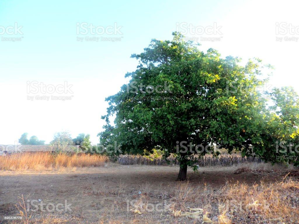 Arvore verde solitária. stock photo
