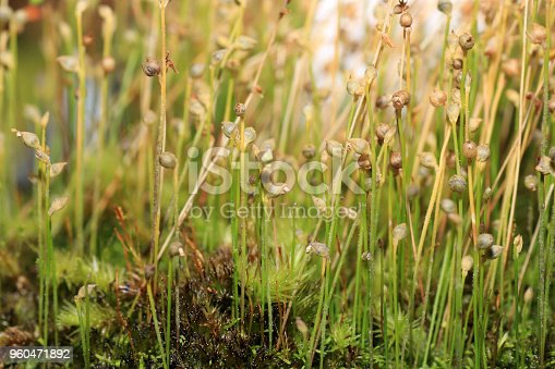 As carnivorous plants, carnivores or insectivores are called plants