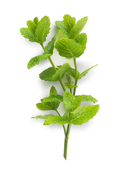 menta - menta erba aromatica foto e immagini stock