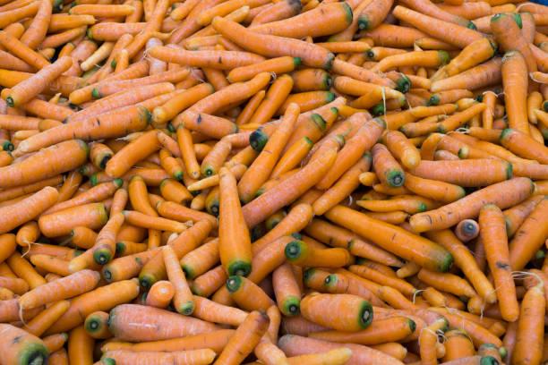 As shot fresh carrot photo stock photo