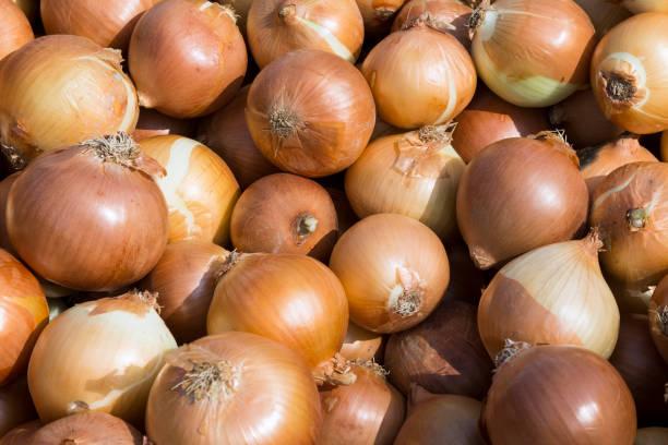 As shot fresh onion photo stock photo