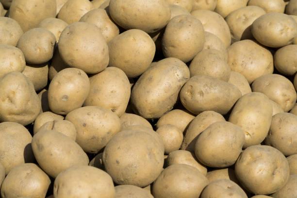 As shot fresh potato photo stock photo