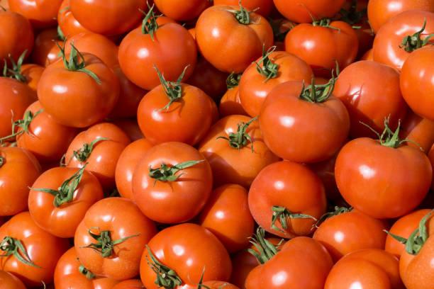 As shot fresh tomato photo stock photo