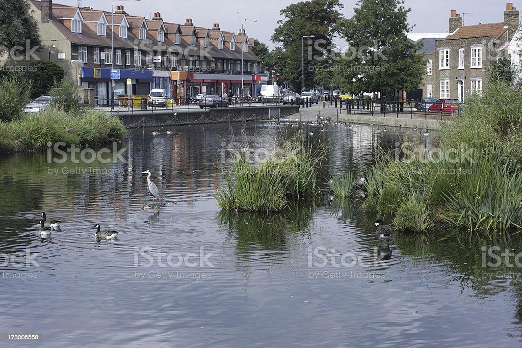 English village pond in Mitcham Surrey with heron stock photo