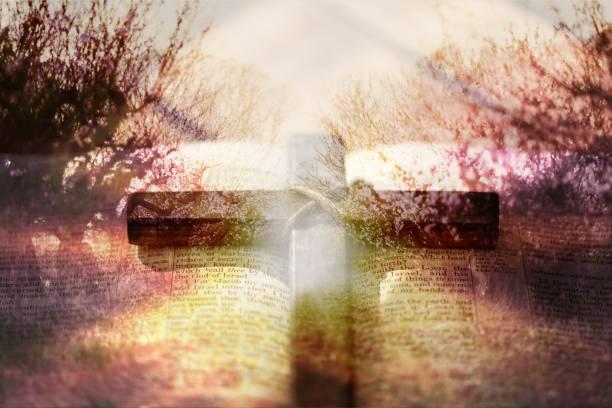 asket. - psalm stock-fotos und bilder